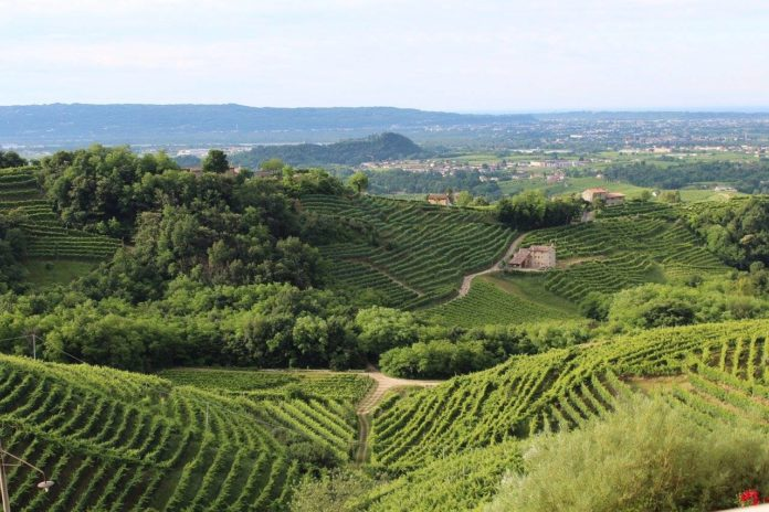 i vitigni del Veneto