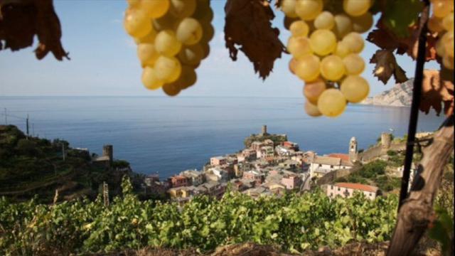 Liguria e vini