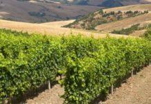 i vitigni della Basilicata