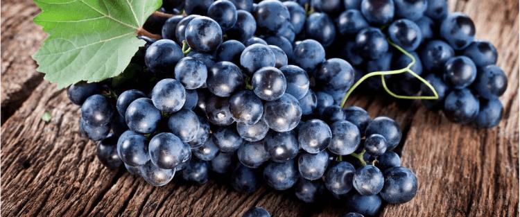 Il vino in Molise, il Tintilia