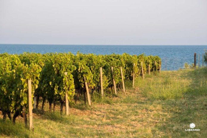 I vitigni della Calabria