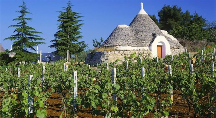I vitigni della Puglia