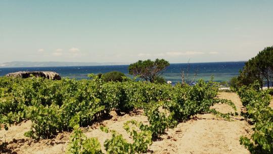 i vitigni della Sardegna
