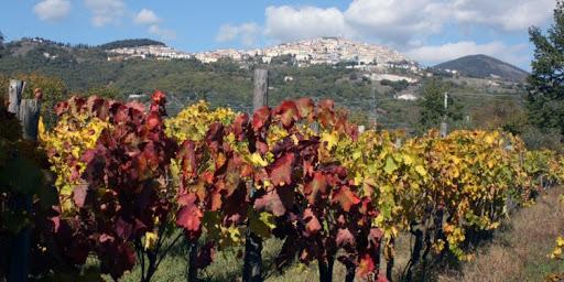 vitigni della Basilicata