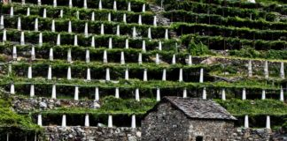 vitigni Valle d'Aosta