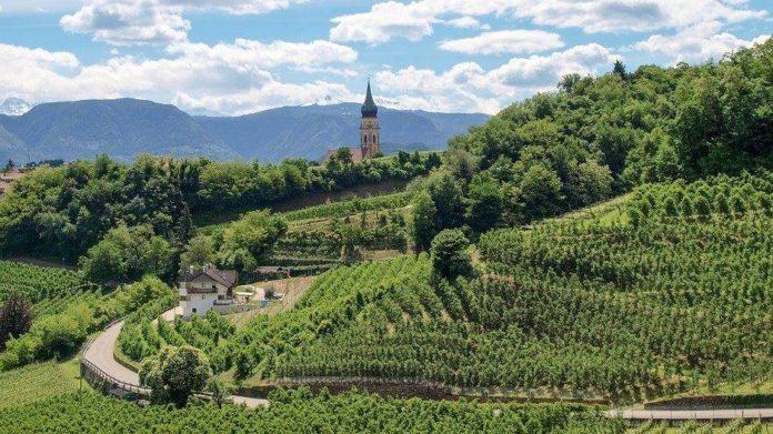 I vitigni del Trentino Alto Adige