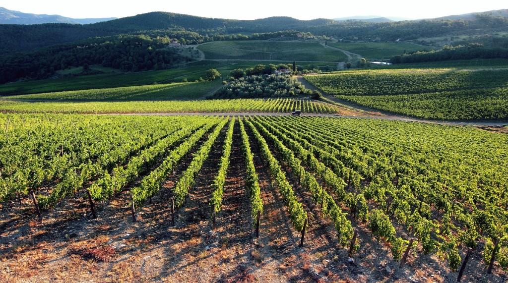 I vitigni in Emilia Romagna