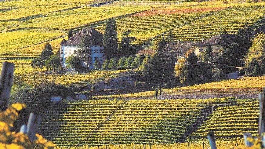 Vitigni del Trentino