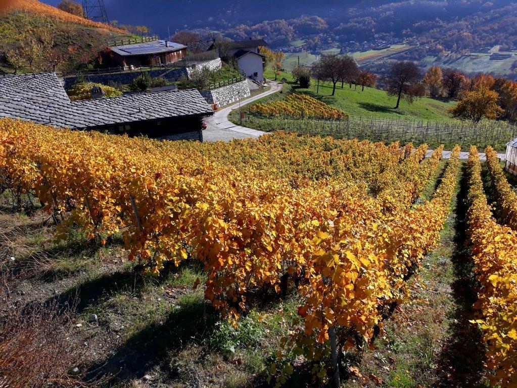 viti valle d'aosta