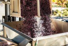 HACCP per vino, cantine e vinerie